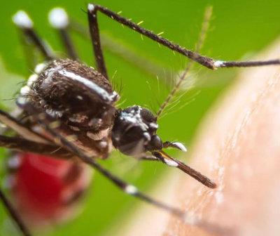 Otra muerte bajo sospecha de dengue