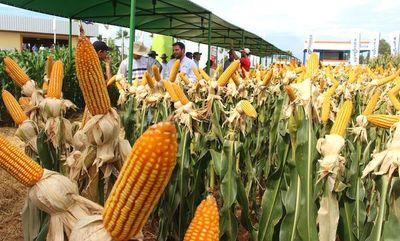 Las exportaciones de maíz se incrementaron 123% en el 2019