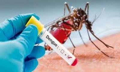 Dengue: Hay más de 2.000 notificaciones por día