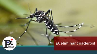 Urgen medidas ante inminente epidemia de dengue