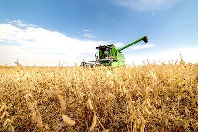 Esperan crecimiento del 35% en el promedio de rendimiento de soja