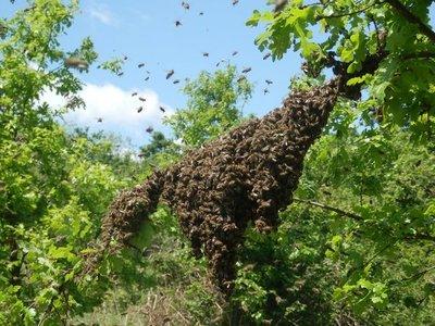 Hohenau: Falleció anciano atacado por abejas