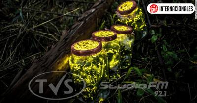 Las luciérnagas se enfrentan a la extinción debido a la pérdida de hábitat, a los pesticidas y a luz artificial