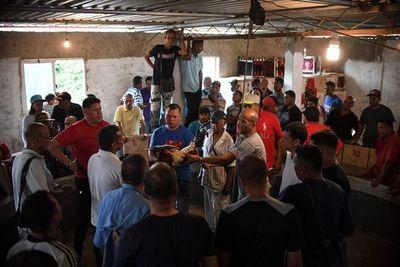 Apuestas en dólares y cero política, peleas de gallos en Venezuela se adaptan a la crisis