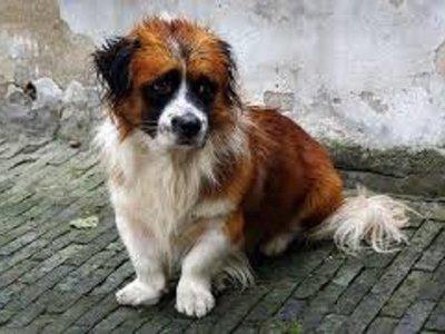Wuhan: Rescatistas alimentan a mascotas abandonadas