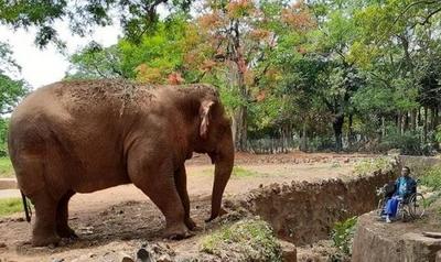HOY / Tras más de 40 años en cautiverio, falleció la elefanta Maia