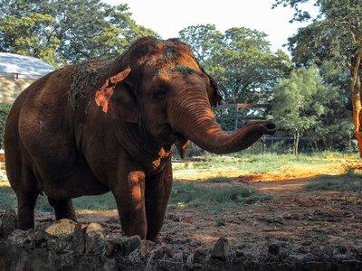 Luto en el zoológico: Murió la elefanta Maia