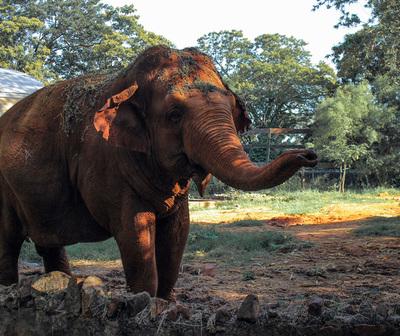 Falleció Maia, la elefanta del Zoológico de Asunción