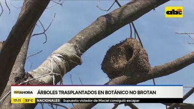 Árboles trasplantados en Botánico no brotan