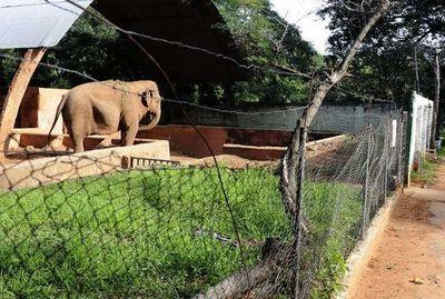 "Segovia plantea ""reconvertir"" el zoológico o cerrarlo progresivamente"