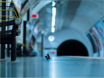 Una pelea de ratones en el metro, mejor foto del año sobre naturaleza