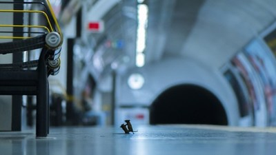 La pelea de dos ratoncitos gana en importante concurso de fotografía