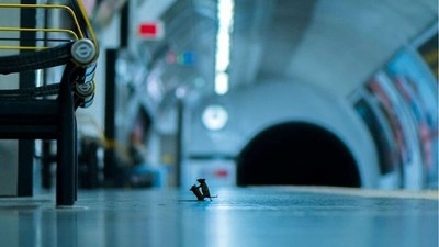 Foto de ratones peleando en el subte gana concurso de vida silvestre