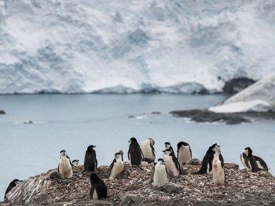 La Antártida registró temperatura récord de más de 20ºC