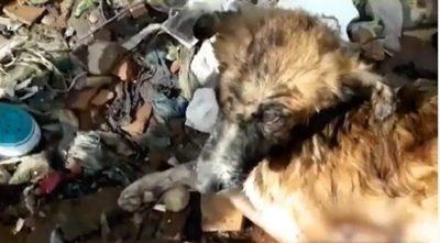 Muere perro maltratado arrojado al río Paraguay