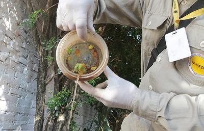 El 95% de los domicilios visitados por Senepa tiene criaderos