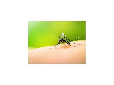 Más de la mitad de fallecidos por dengue son de Asunción y Central