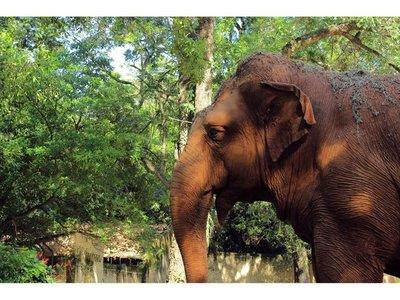 Maris Llorens recuerda el cariño y su vivencia con la elefanta Maia