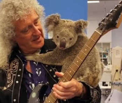 Guitarrista tocó para un koala víctima de incendio en Australia