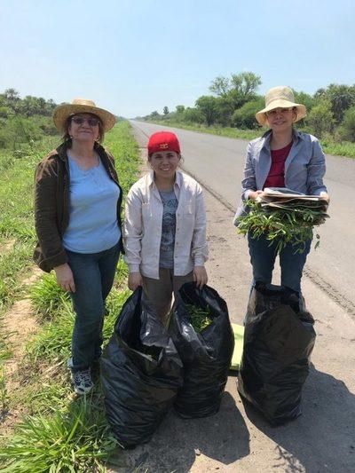 Científicas paraguayas son premiadas por sus estudios sobre plantas medicinales