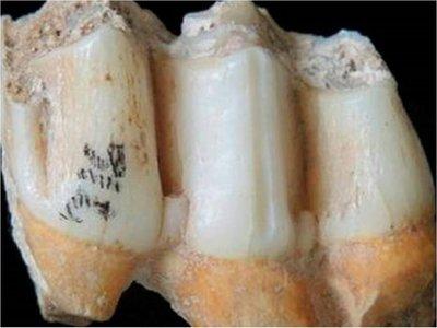 El zinc del esmalte dental, clave para saber la dieta de seres prehistóricos