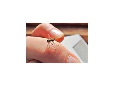 Hallan método para detectar el dengue en diez minutos