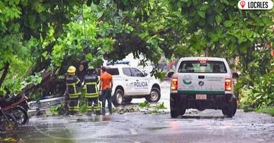 Tras temporal Bomberos cooperaron para el despeje de árboles caídos en Encarnación