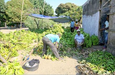Brasil y Japón planearon una revolución agrícola en Mozambique