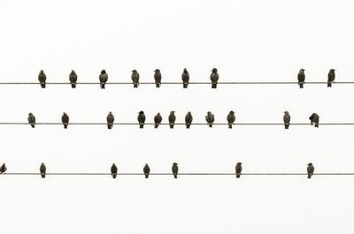 Los paradigmas y desafíos del e-commerce y negocios offline