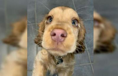 Conoce a Winnie, el perro con los ojos del Gato con Botas