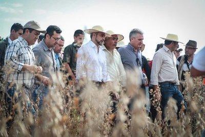 Comenzó el periodo de cosecha de soja. Hay expectativa de rentabilidad de G. 7.000.000 por hectárea