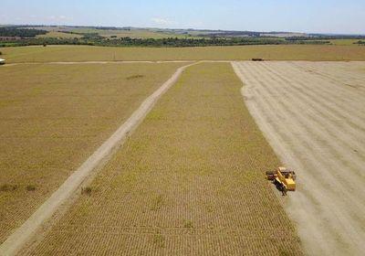 Paraguay sube un lugar en el ranking de productores mundiales de soja