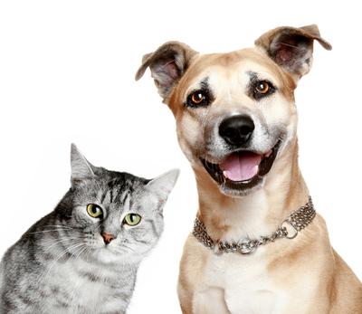 Ordenanza prohíbe tener más de dos perros y gatos en María Auxiliadora