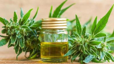 Comenzó el otorgamiento de licencias para producción de cannabis medicinal