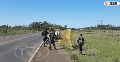 Firman convenio para retirar animales sueltos de las rutas