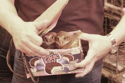 Rescatan animales silvestres que eran vendidos ilegalmente en el Mercado Nº 4