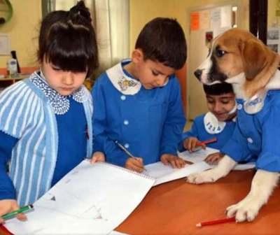 Findik, el perro que se convirtió en mejor alumno