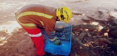 Rescatan un primate herido en Carapeguá