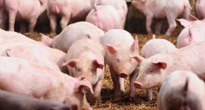 La carne de cerdo va ganando terreno