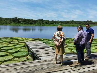 En Limpio instan a valorar y proteger planta acuática en peligro de extinción