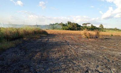 Queman intencionalmente plantación de soja en O'leary