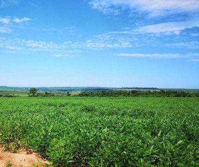 Argentina avisa a agricultores que subirá tributo a exportación de soja