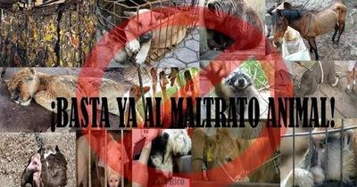 ¡No a la violencia contra los animales!