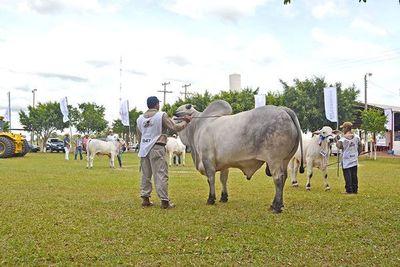 Recesión económica y clima determinaron la suspensión de Expo Curuguaty