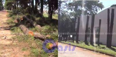 Pastor de iglesia evangélica mando cortar árboles históricos en Pedro Juan