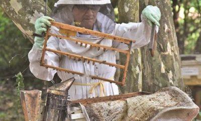 » Bajo consumo de miel preocupa al sector apícola