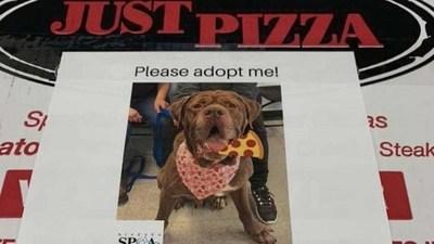 Estados Unidos: Esta pizzería pone fotos de perritos en sus cajas para ayudar que los adopten