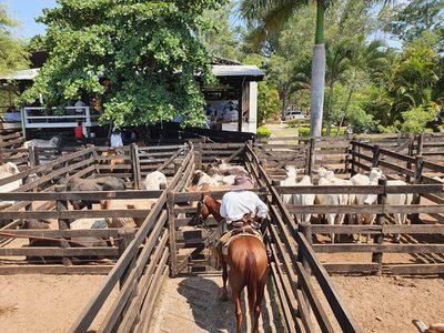 Marzo comenzó con más oferta y menos valores para los ganados de consumo