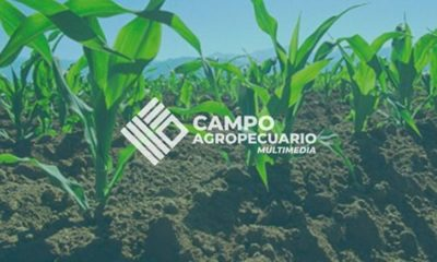 » El clima reducirá oferta de semillas certificadas