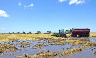 » DÍA DE CAMPO EN CAAPUCÚ: El ascenso del arroz